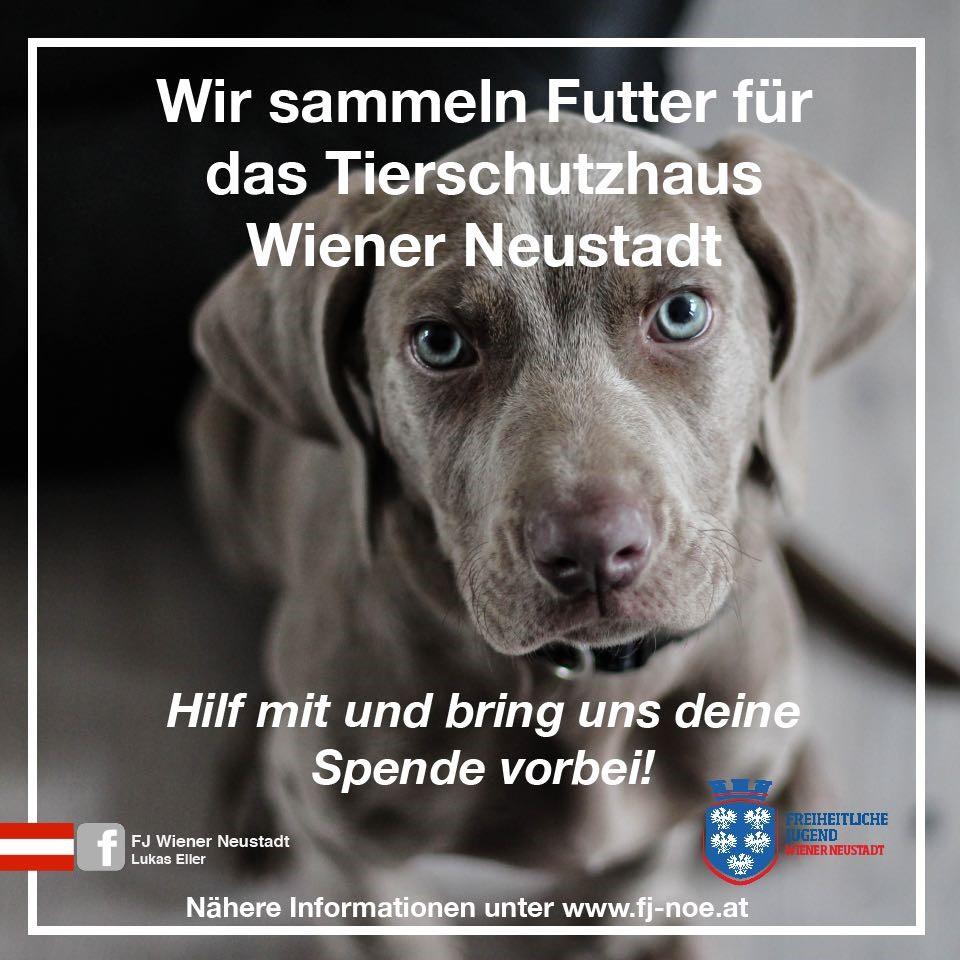 Fj Eller Tierschutz Hinschauen Statt Wegschauen Freiheitliche